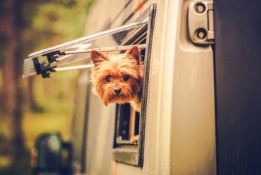 Pet Friendly Travel Featured Image