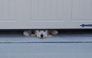 Logan Peeking Under Garage Pet Friendly Travel
